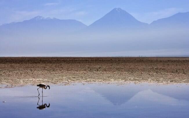 Flamingos na lagoa Chaxa, no Deserto de Atacama