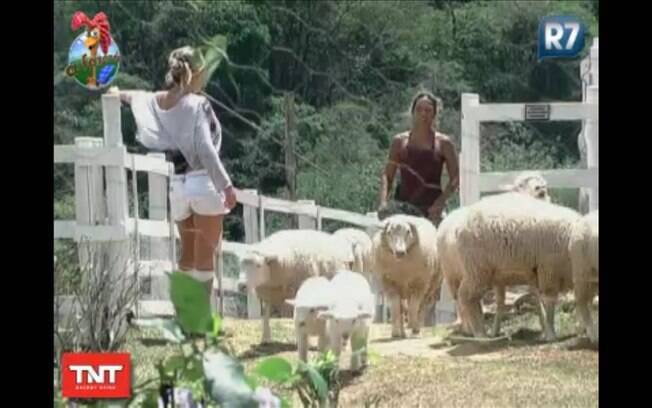 As peoas acreditam que cuidar dos animais solidariamente ajuda a terminar mais rápido