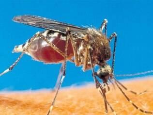Com alterações genéticas, seria possível colocar uma toxina no sêmen do mosquito, de forma que ele ou mate a fêmea ou a deixe infértil