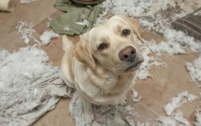 Cães bagunceiros e mal educados podem ser um grande problema para os donos