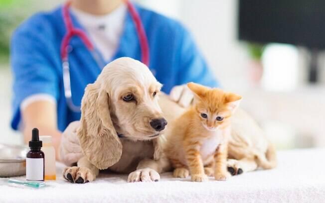 Pets são levados frequentemente ao veterinário