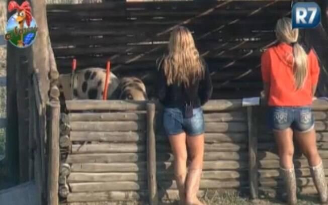 Raquel Pacheco e Joana Machado observam os porcos no chiqueiro