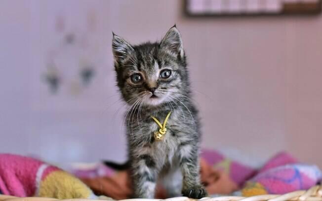 Você pode ter certas atitudes que estão mais irritando do que agradando seu gato