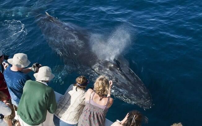Em algumas ocasiões, a curiosidade do animal o leva até bem perto do barco