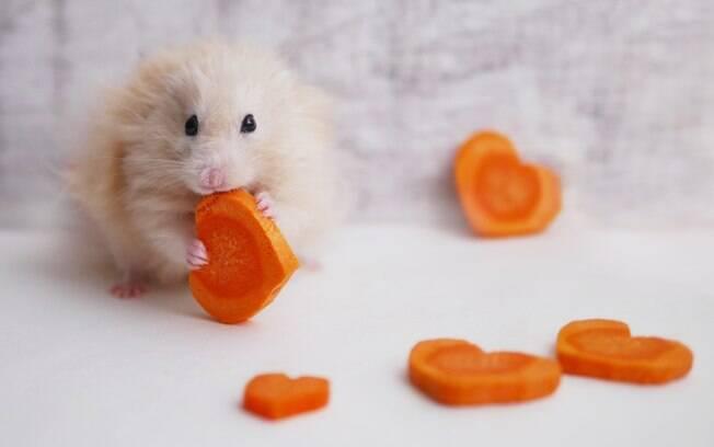 Hamster comendo cenoura
