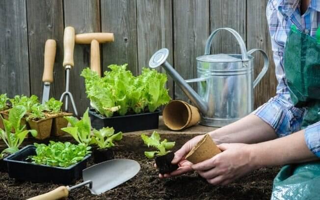 Horta caseira: aprenda como montar a sua