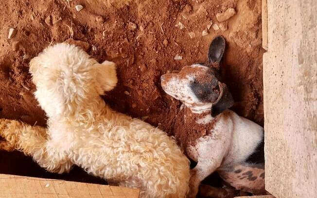 Cães dormindo em buraco