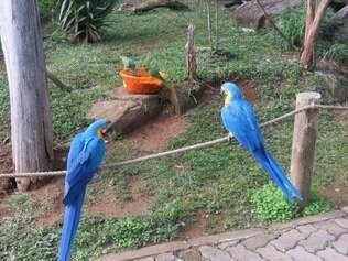 Gramadozoo é uma forma divertida de conhecer a fauna do Rio Grande do Sul