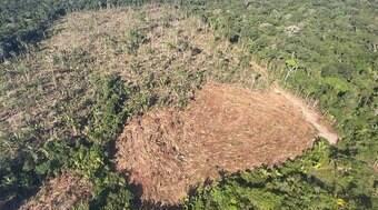 Podcast destaca como a Amazônia acelerou o aquecimento global