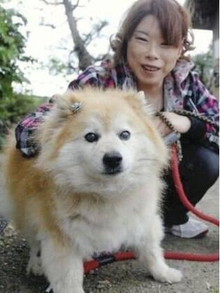 Pusuke, cão mais velho do mundo, com sua dona