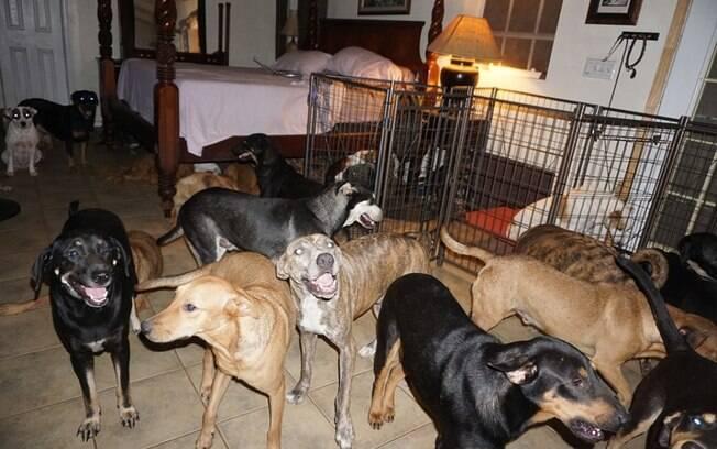 Cães se abrigando de furacão