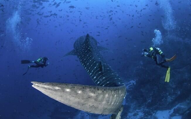 O turismo na Costa Rica gira muito em torno da riqueza da sua fauna marítima - você pode até nadar com tubarões baleia