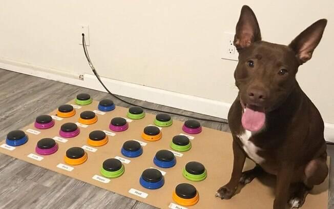 Stella, o cão que está aprendendo a