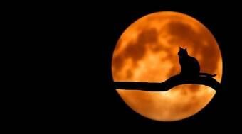 Descubra qual raça de gato combina mais com o seu signo
