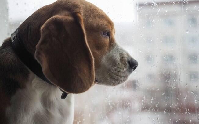 Os animais também precisam de cuidados nos dias de chuva