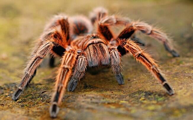 Acidente foi causado por aranha