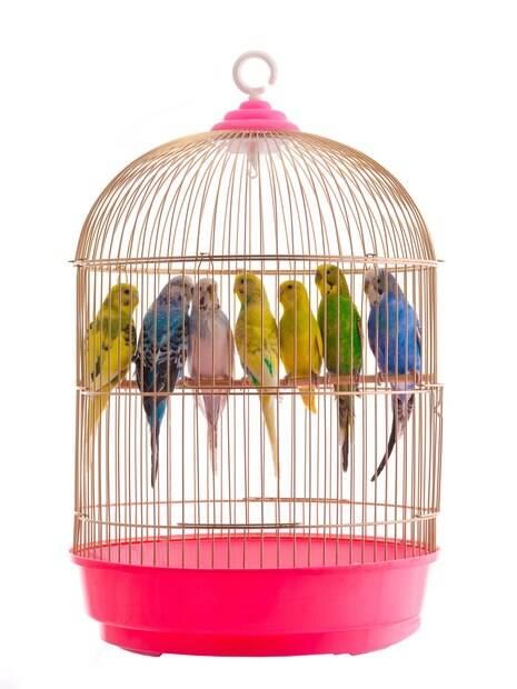 Não compre gaiolas redondas, pois elas tiram a noção de espaço da ave