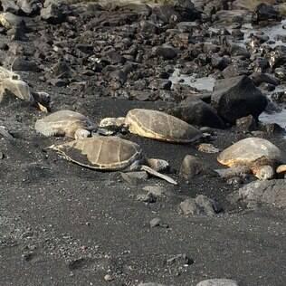 Tartarugas marinhas: a preservação da fauna é um assunto que os havaianos levam a sério