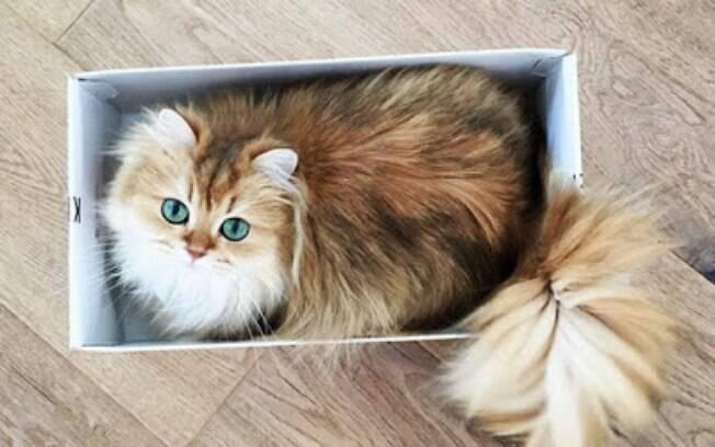 Ela fica linda até dentro de uma caixinha.