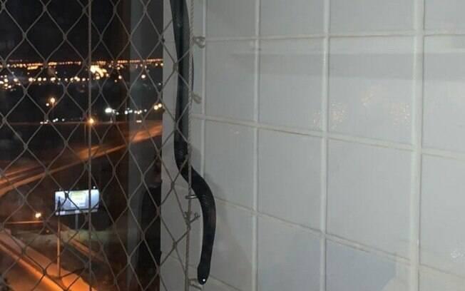 A cobra foi encontrada na varanda de um apartamento do quarto andar.