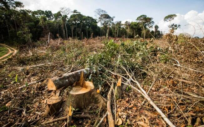 Noruega colabora com combate ao desmatamento na Amazônia há dez anos