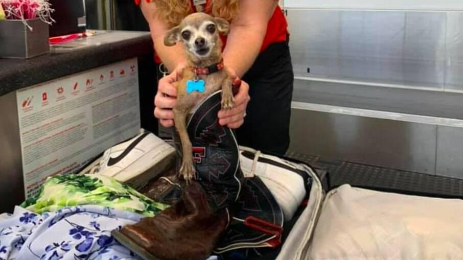 O animal estava dentro de uma bota que estava na mala
