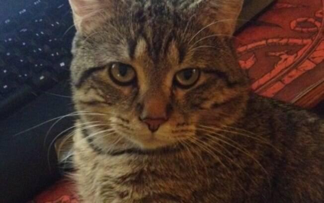 Não queria te falar não, mas esse gato viu todo o histórico do seu navegador