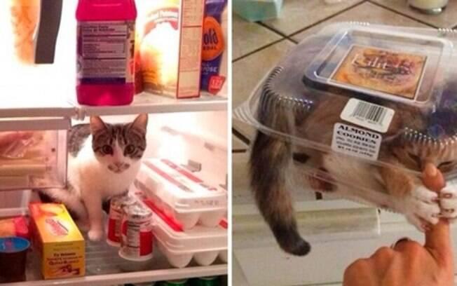 Gatinhos encontrados em lugares estranhos.