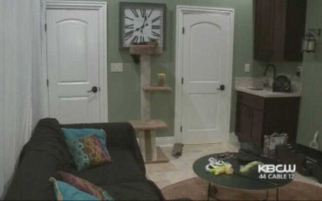 O apartamento está localizado no Vale do Silício. As gatas têm acesso a um banheiro com chuveiro e até mesmo a uma Apple TV, mas não há cozinha no local