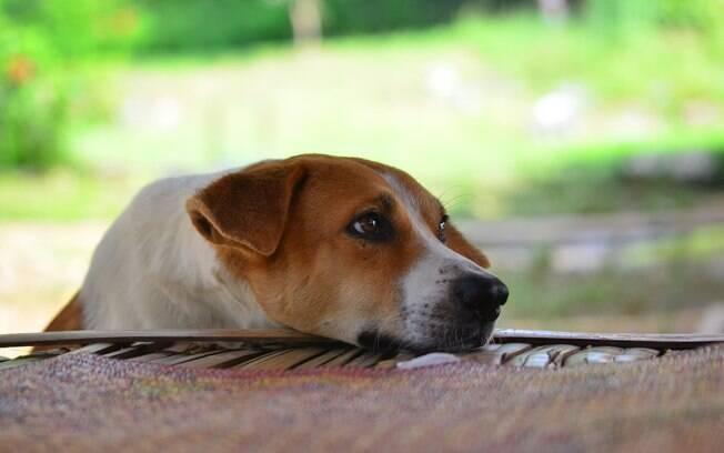 Saiba quando o cachorro está triste com você