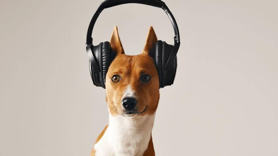 Os cães não são muito fãs de rock pesado
