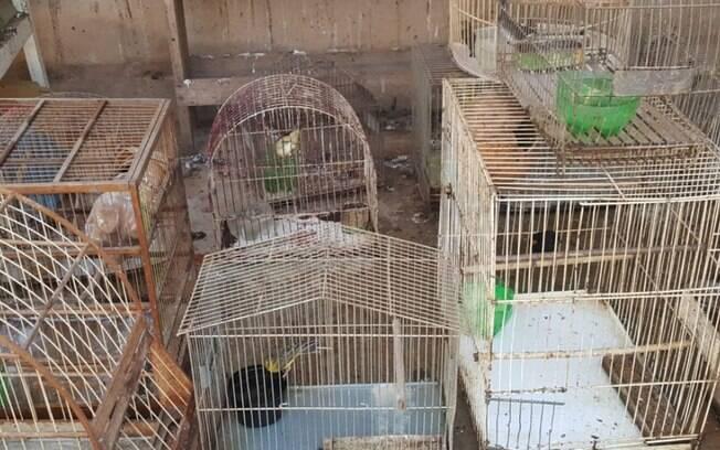 Polícia Ambiental resgata 31 animais silvestres que eram mantidos em cativeiro