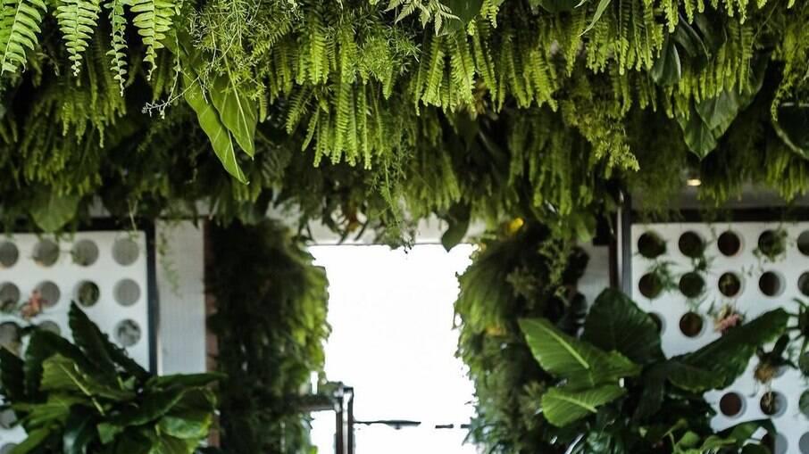 Folhas verdes e volumosas podem ser uma opção para a decoração