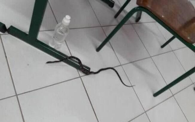 Cobra entra em sala de votação e suspende votos em Santa Catarina