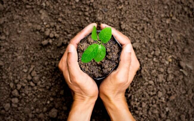 Plantar uma árvore também está entre as alternativas para deixar a casa arejada