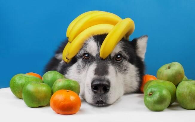 Ter um animal vegetariano em casa demanda muita atenção e acompanhamento médico intensivo. Além disso, é preciso estar disposto a gastar o necessário para proporcionar um alimento completo e de qualidade para ele