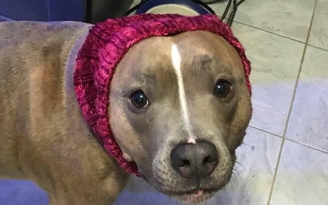 A pitbull Leela tem comportamentos bem diferentes, mas isso só a deixa mais adorável