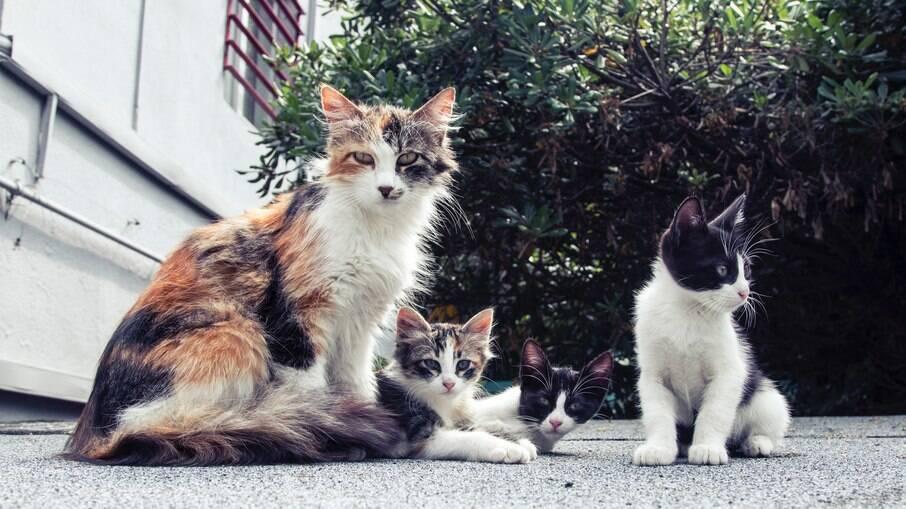 Superpopulação de gatos no Chipre preocupa voluntários