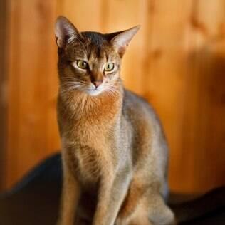 Gato exótico - undefined