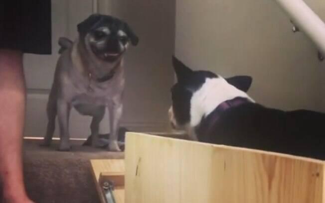Mulher constrói elevador de madeira para cães idosos; veja