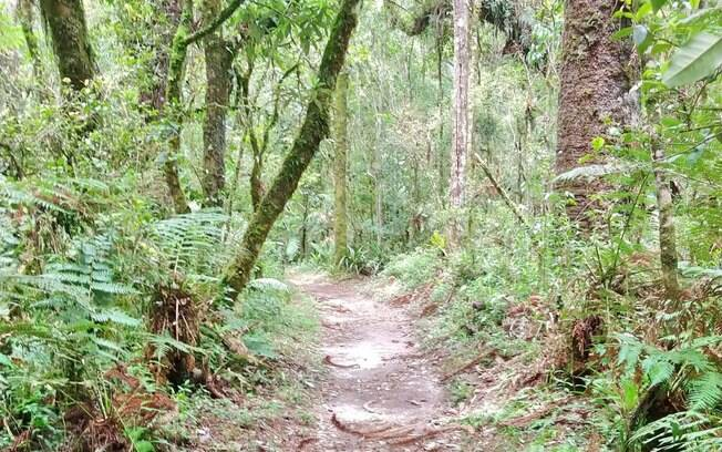 Atraente para os mais aventureiros, a Trilha do Rola Tronco oferece mais periculosidade  pelos troncos soltos e raízes