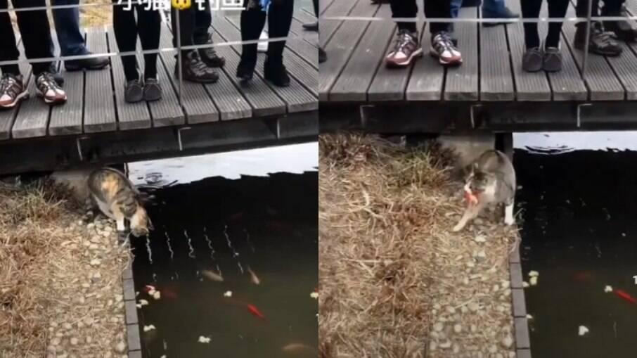 Gatinho surpreendeu visitantes ao pescar um peixe