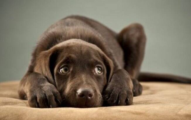 A maior parte dos cachorros tem medo de fogos de artifício