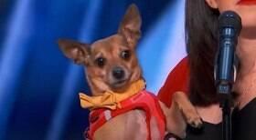 Cão é aplaudido de pé por jurados em programa