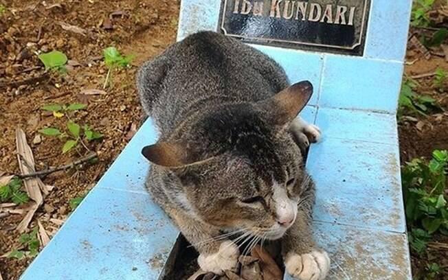 Gata está há um ano ao lado do túmulo do dono