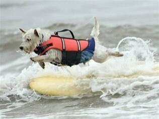 Cerca de 40 cachorros pegaram onda nos EUA e até tentaram bater um recorde