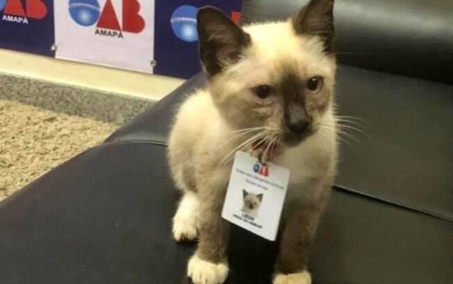 O gato de rua Leon com seu crachá da OAB