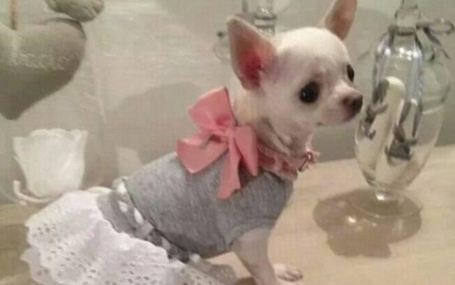É preciso saber se o animal se sente confortável para usar roupas para cachorro