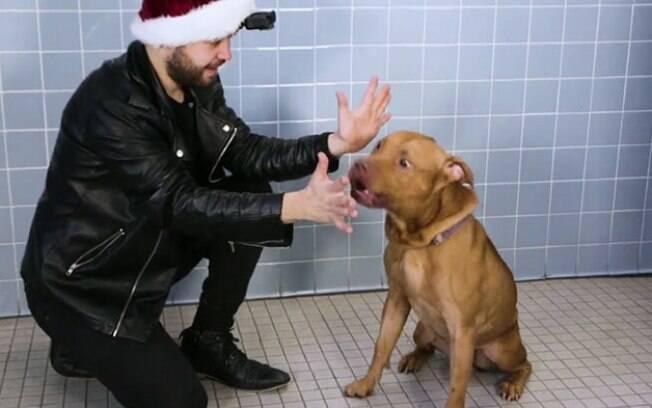 Mágico faz show participar para cães de abrigo e as reações deles são incríveis