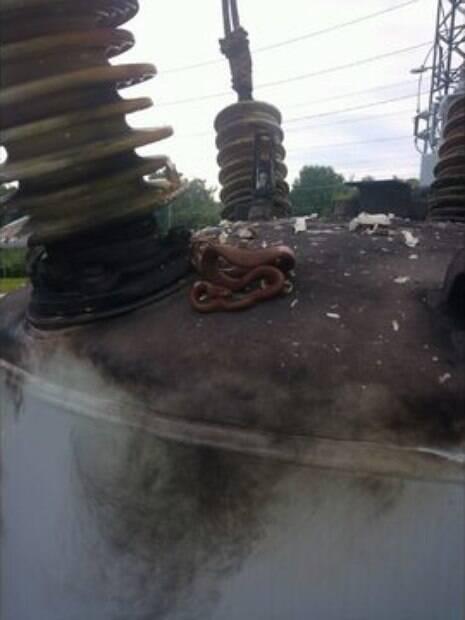 Na Flórida, uma cobra deixou cerca de 22 mil moradores sem energia
